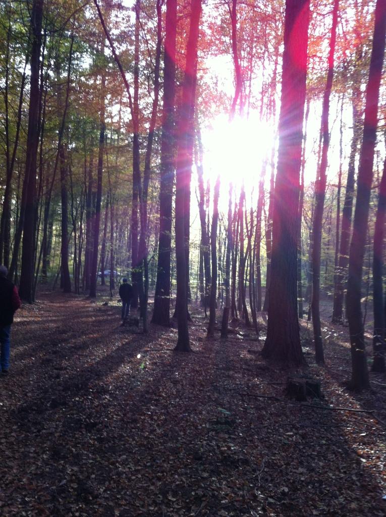 im Wald zwischen Stromberg und Caan